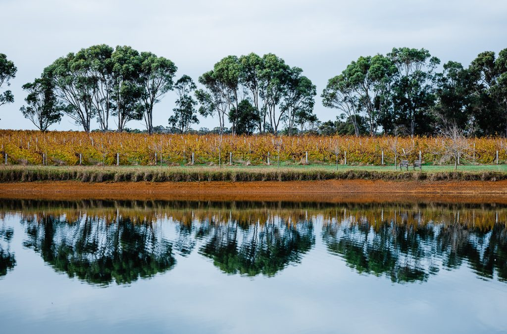 10 Things to do within a 10-minute drive of Margaret River Nougat Co